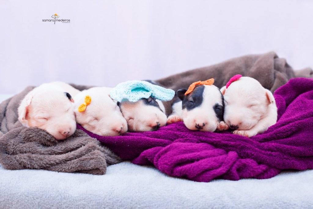 ensaio-newborn-pet