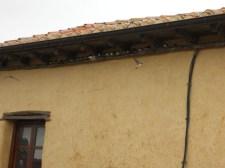 098 Refugio Alcuetas
