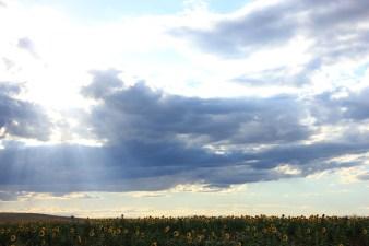 181 Mirada al Sol Matanza de los Oteros