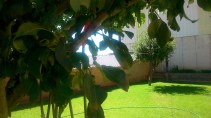 063 - El patio de los perales