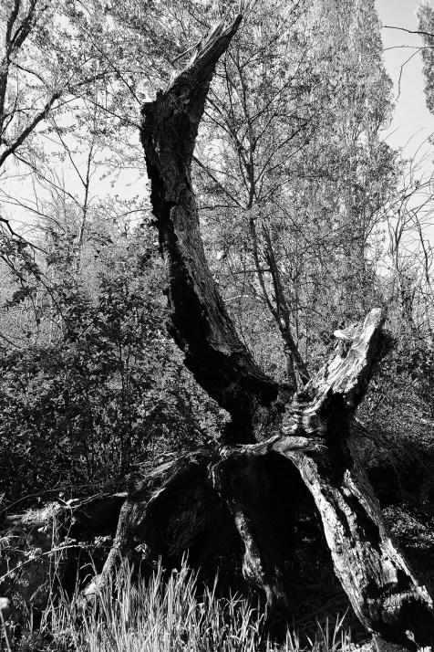 070 - El sueño de la Razón Produce Monstruos en Valduertos