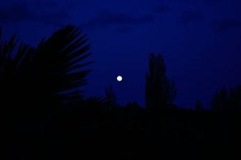 071 - La luna del Caño Camina hacia su Nido