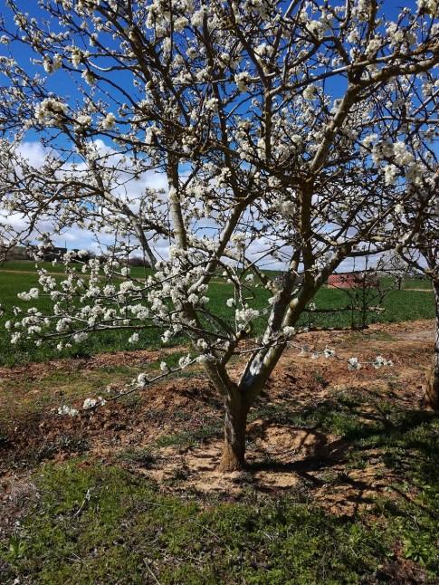 106 - Primavera