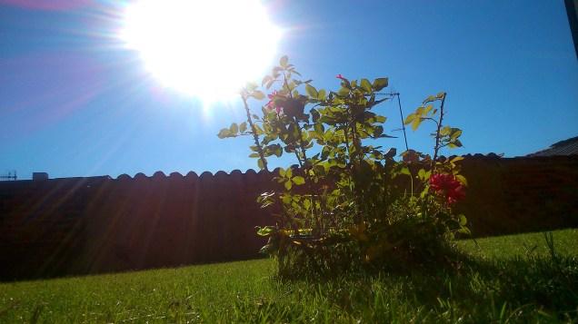 112 - Sol y rosas