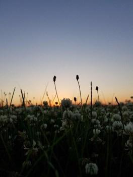 119 - Flores al Campo