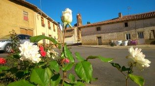 124 - Rosas como Torres
