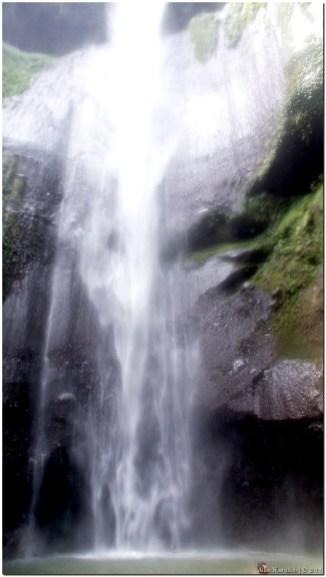 Ini adalah air terjun utama Madakaripura atau air terjun paling besar yang ada. Total ada lima air terjun. Tiga air terjun pertama ada di jalan yang dilewati orang ketika menuju lokasi air terjun utama ini. Dan dua air terjun yang lain adalah air terjun ini dan air terjun desebelahnya. Air terjun di sebelanya memiliki tinggi yang sama dengan air terjun ini tetapi sedikit lebih kecil debit airnya. #jagalingkungan