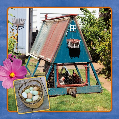This A-Frame is a fun alternative style coop that can move around the yard for fertilizing different areas.