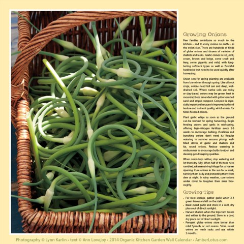 2014 Organic Kitchen Garden wall calendar