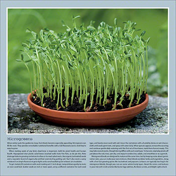 Image from our Organic Kitchen Garden 2016 wall calendar. Microgreens © Lynn Karlin Photography. Click image for more info.