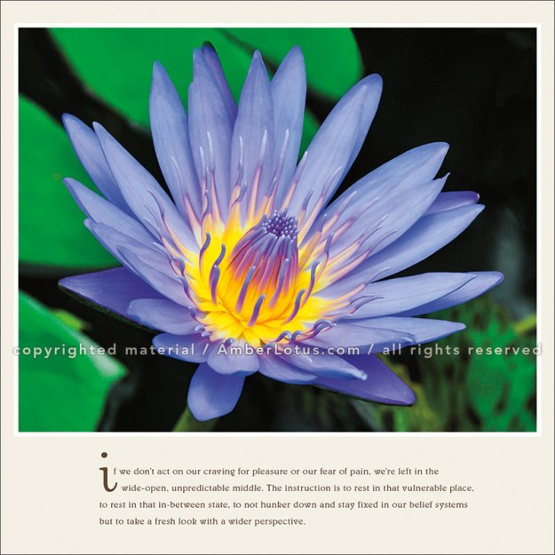 Pema Chodron 2017 wall calendar by Amber Lotus Publishing