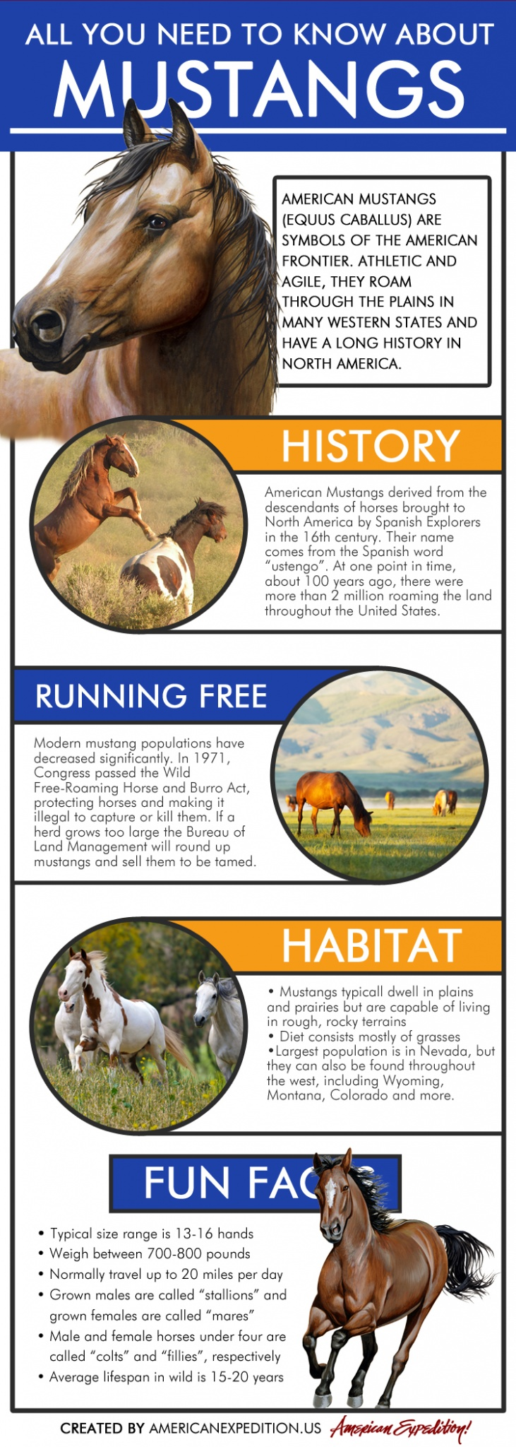All You Need to Know About Mustangs Infographic