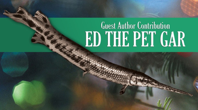 Ed the Pet Gar