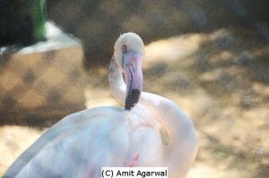 Swan in Zoo
