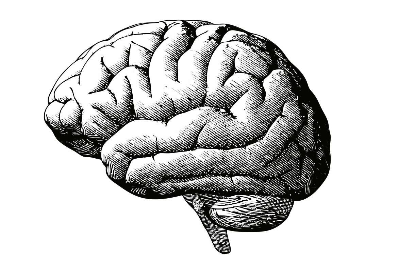 amn academy brain
