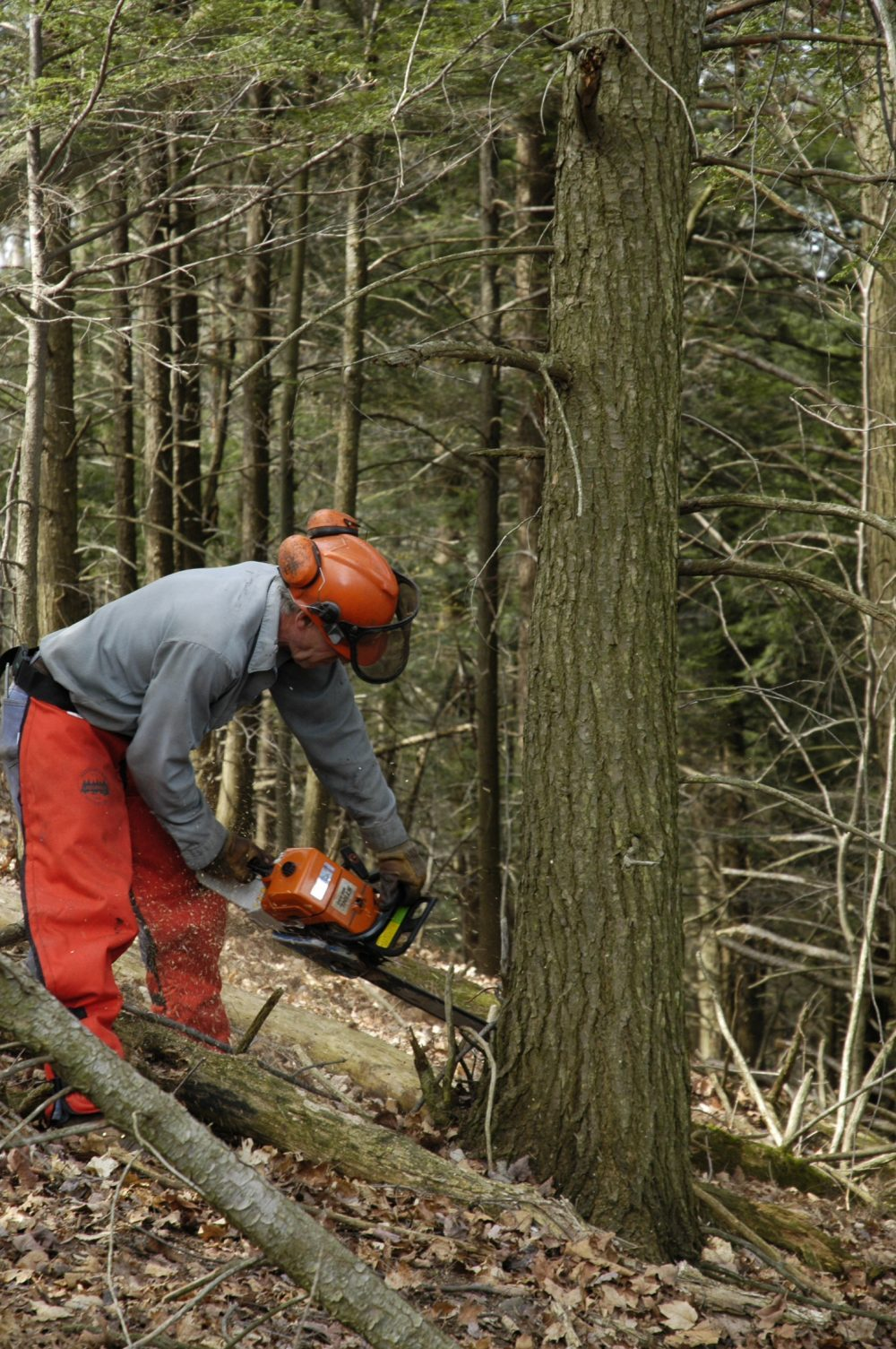 5 expert chainsaw maintenance tips amsoil blog greentooth Gallery