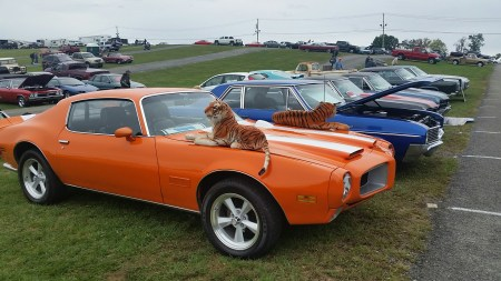 orange pointiac trans am with dog - Carlisle Car Show