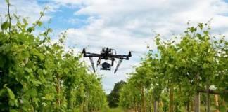 Drone Vigneto