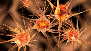 25634425 - 3d illustration of neuronal cells.
