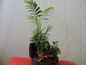 Baúl de Plantas