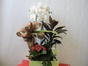 Caja de Plantas con Orquidea