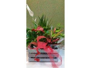 Caja de Plantas