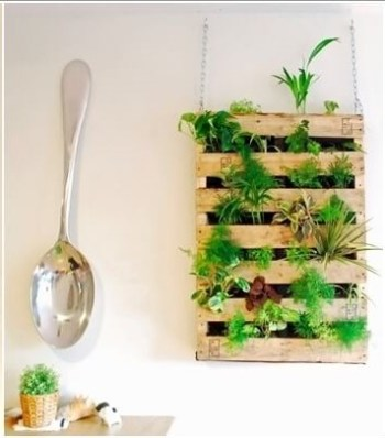 Herb garden in a kitchen.