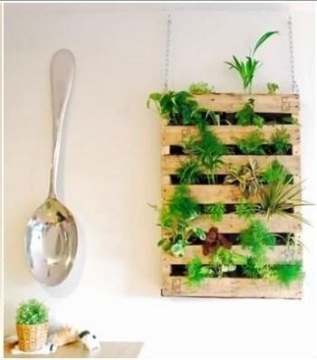 Herb garden in a kitchen.