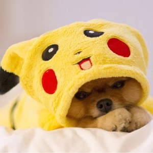 Pikachu-dog-tired
