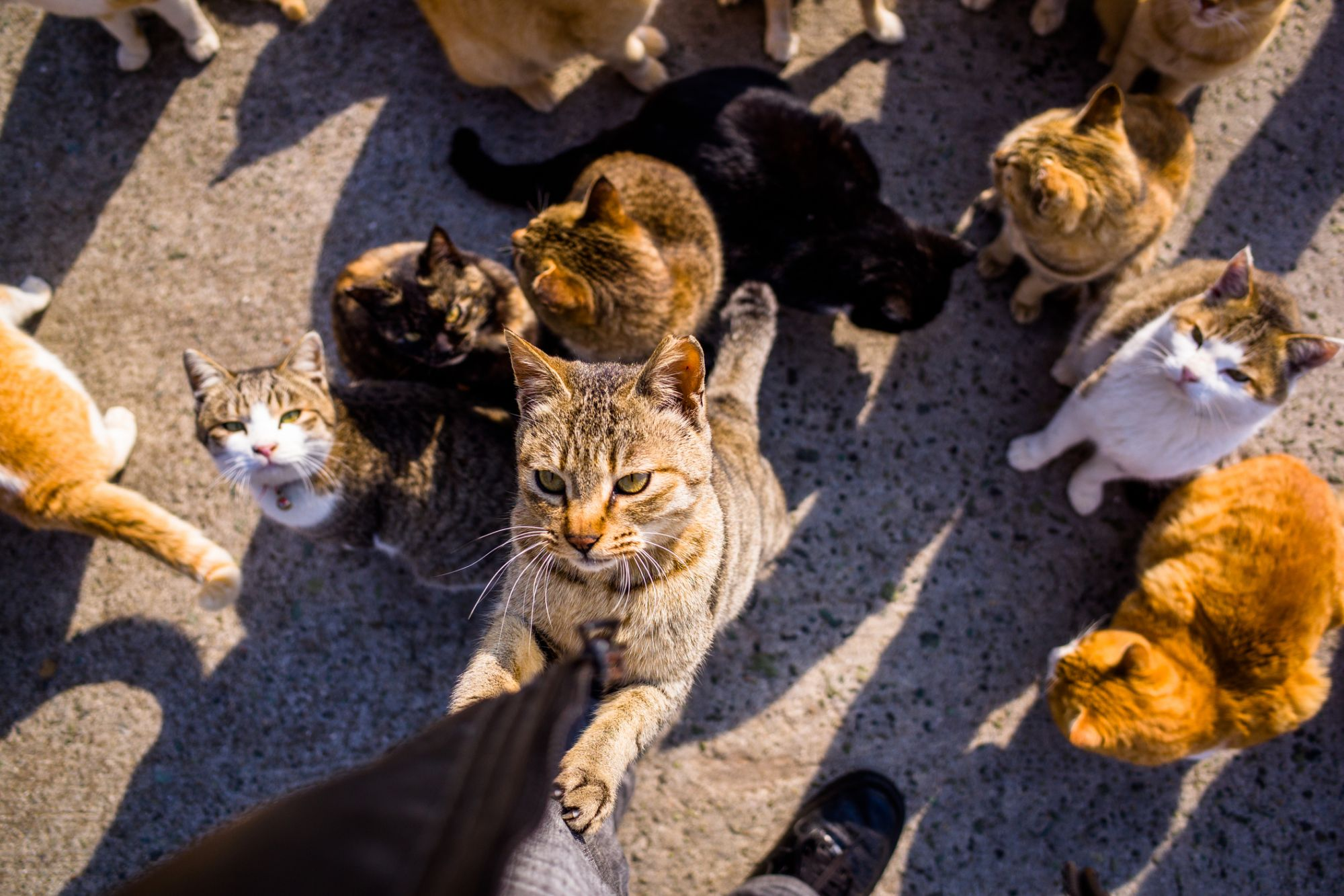 'Don't Try to Herd Cats' -- and 4 Other Leadership Tips for the Gig Economy