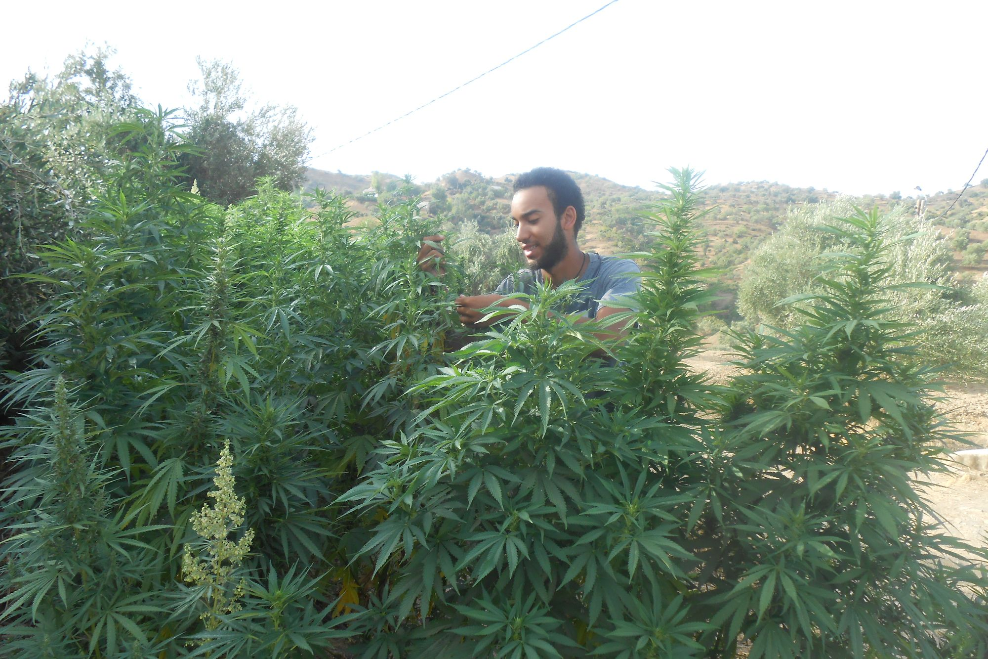 High Hopes for the Cannabis Tourism Industry
