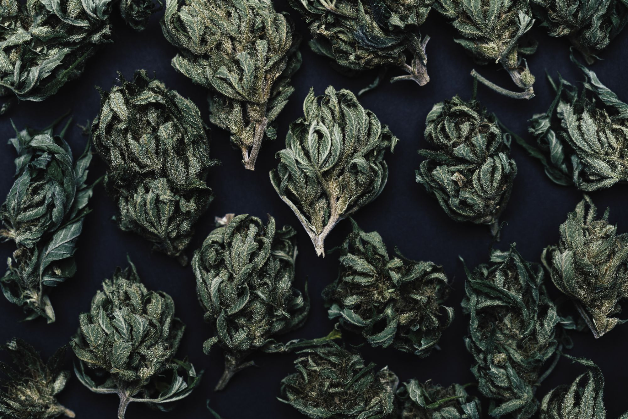 5 New Cannabis Trends You Need to Know