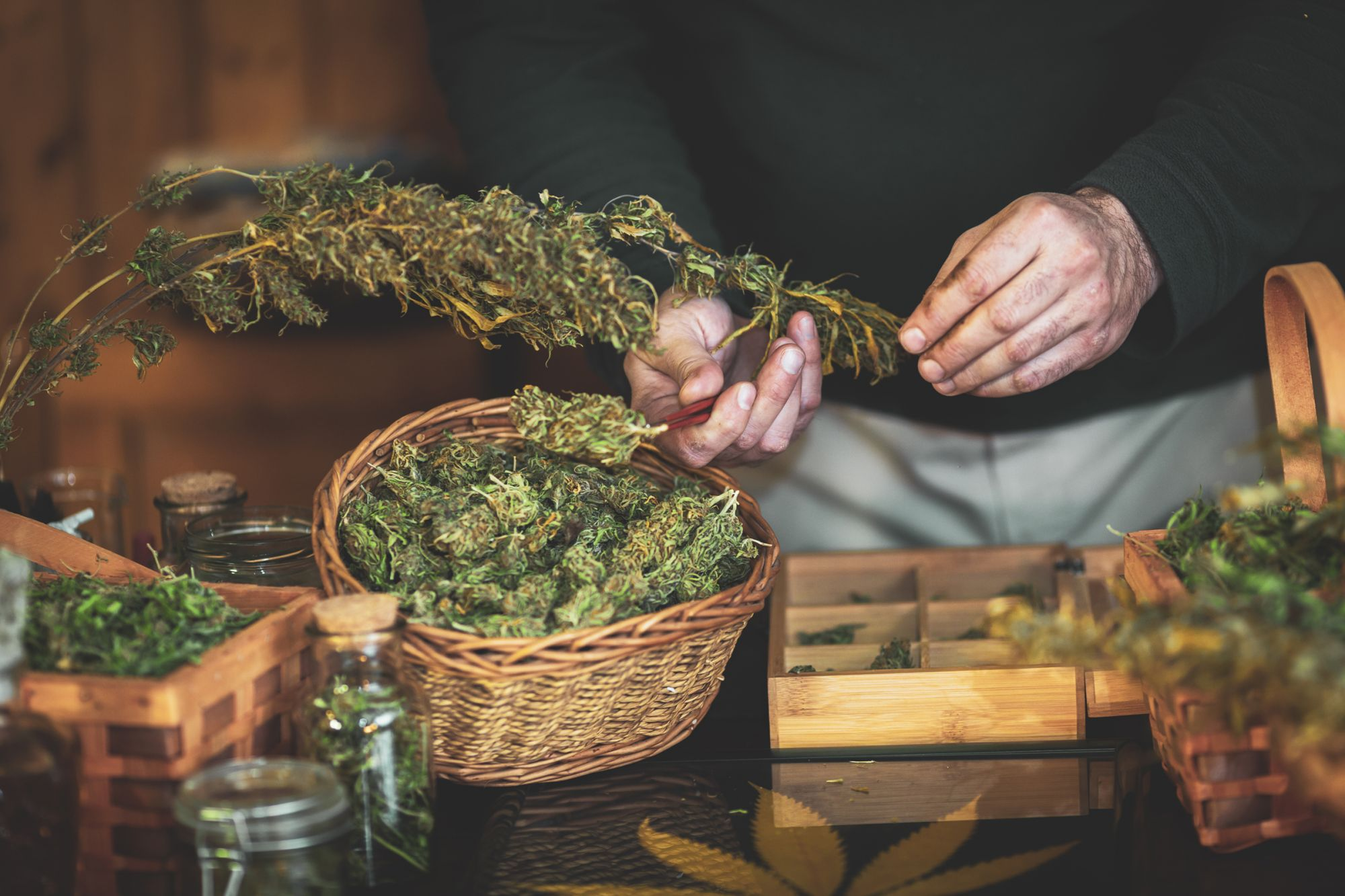 It's Time to Recognize Cannabis Is a Valid Business Career