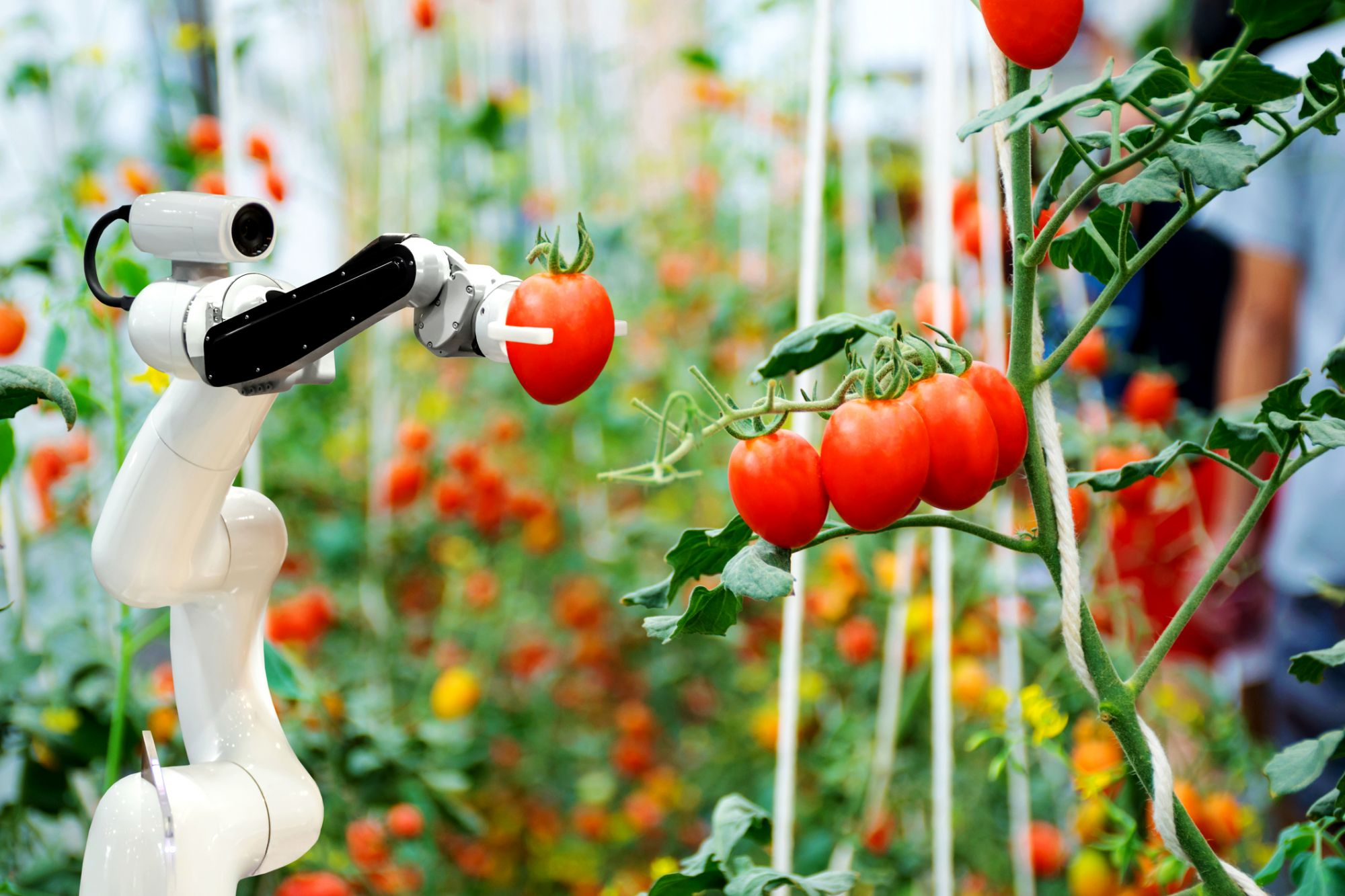 3 Ways Technology Is Changing the Food-Growing Industry