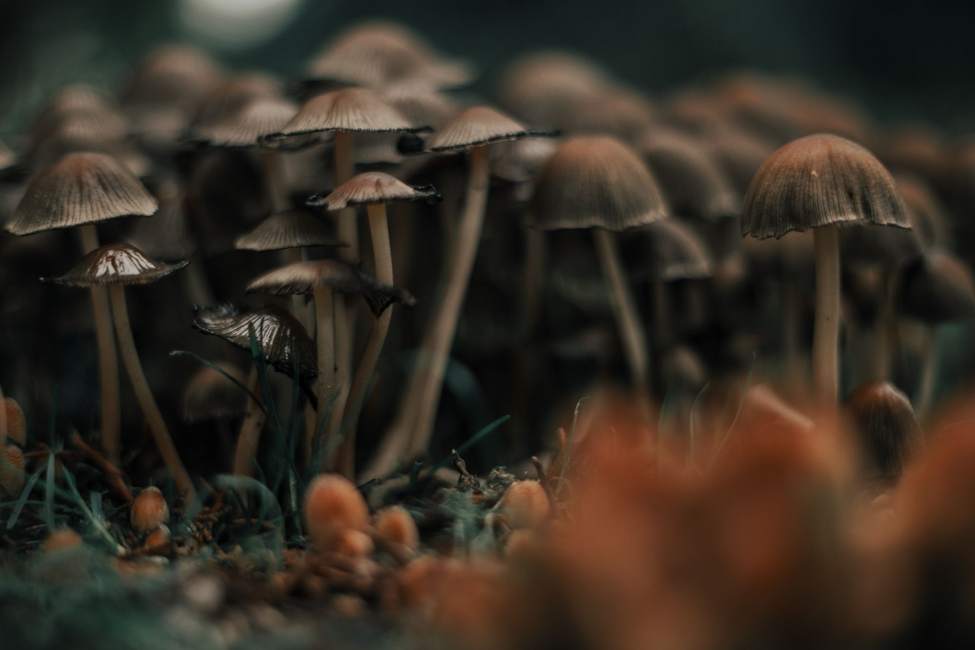 After Cannabis, Is The Next Startup Boom Mushrooms?