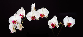 Orchid Heaven by Terry Thompson