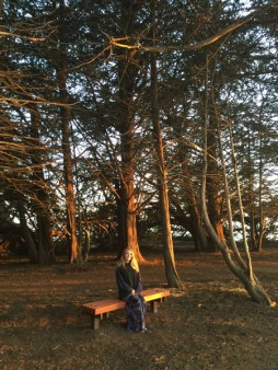 Beautiful trees near Big Sur