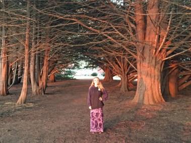 Oh those trees - Near Big Sur