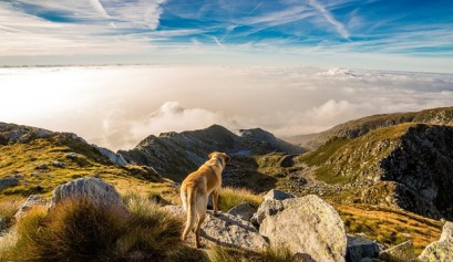 how to go camping with dogs, picture of a dog standing on top of a mountain with blue skies and clouds, camping with dogs