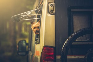 tips-for-rving-bring-dog