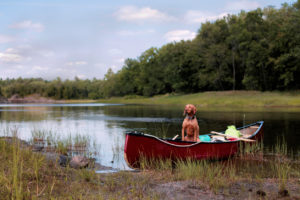 rv-dog-camping-water-safety