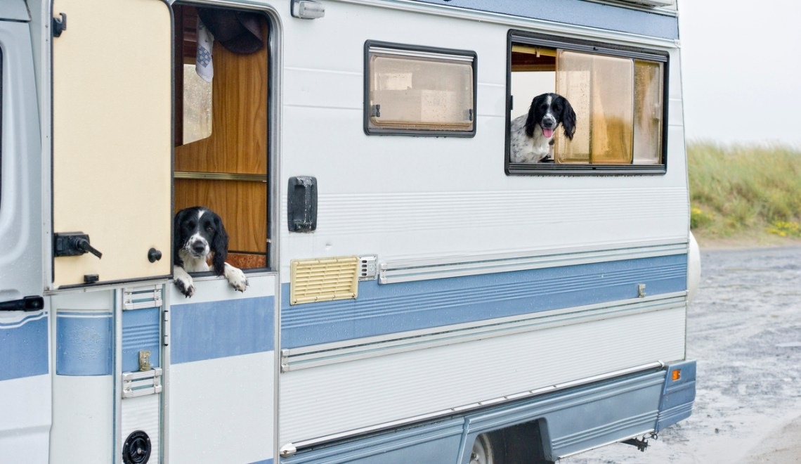 10 Tips for Clean RV Camping with Dogs