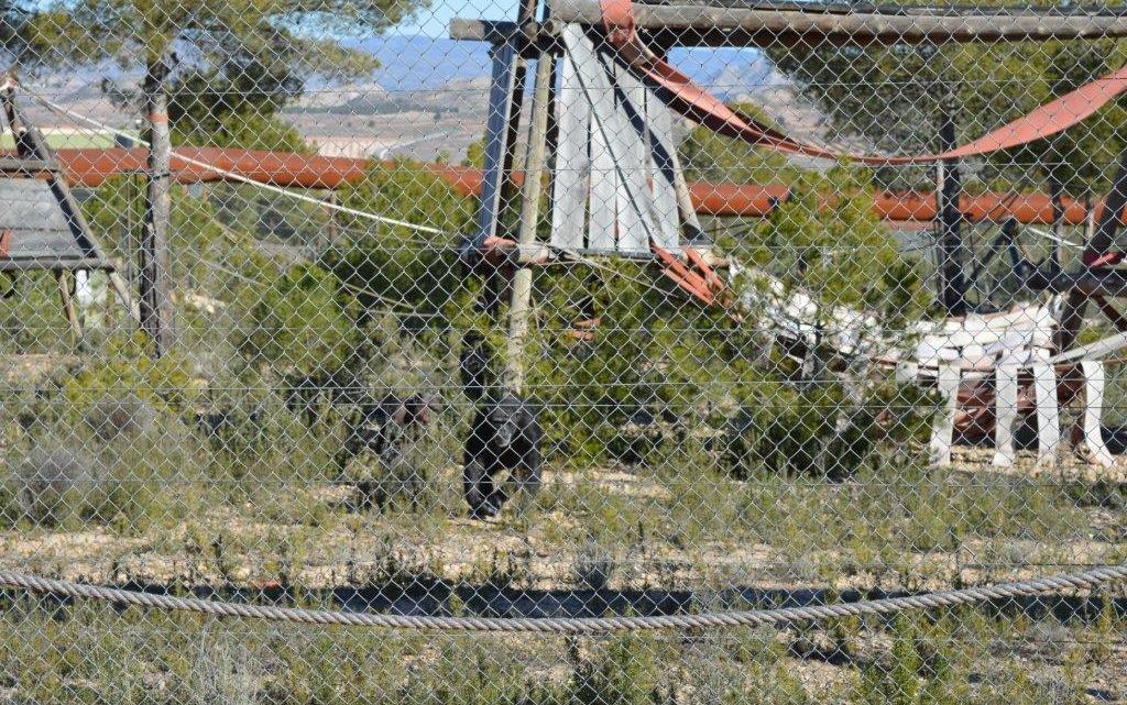 Chimpancés en Primadomus Villena
