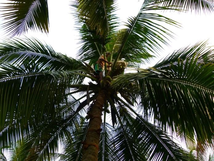 Viajar a India: La plantación de cocoteros en los Backwaters de Kerala