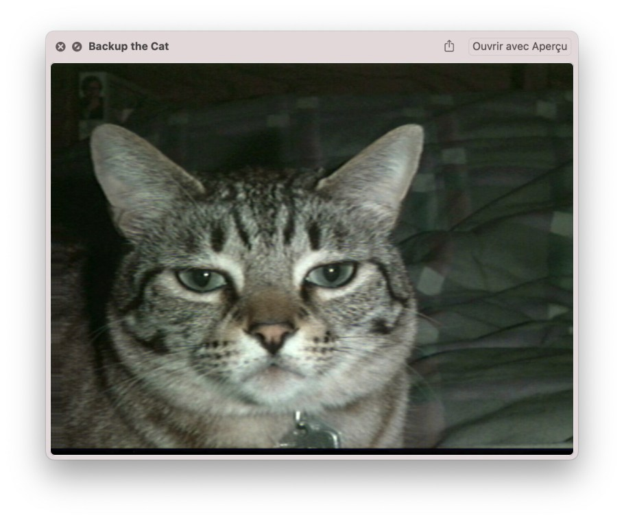 Apple quicktime beta - Backup the cat image