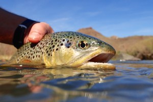 Stay warm for winter fly fishing with these tips.