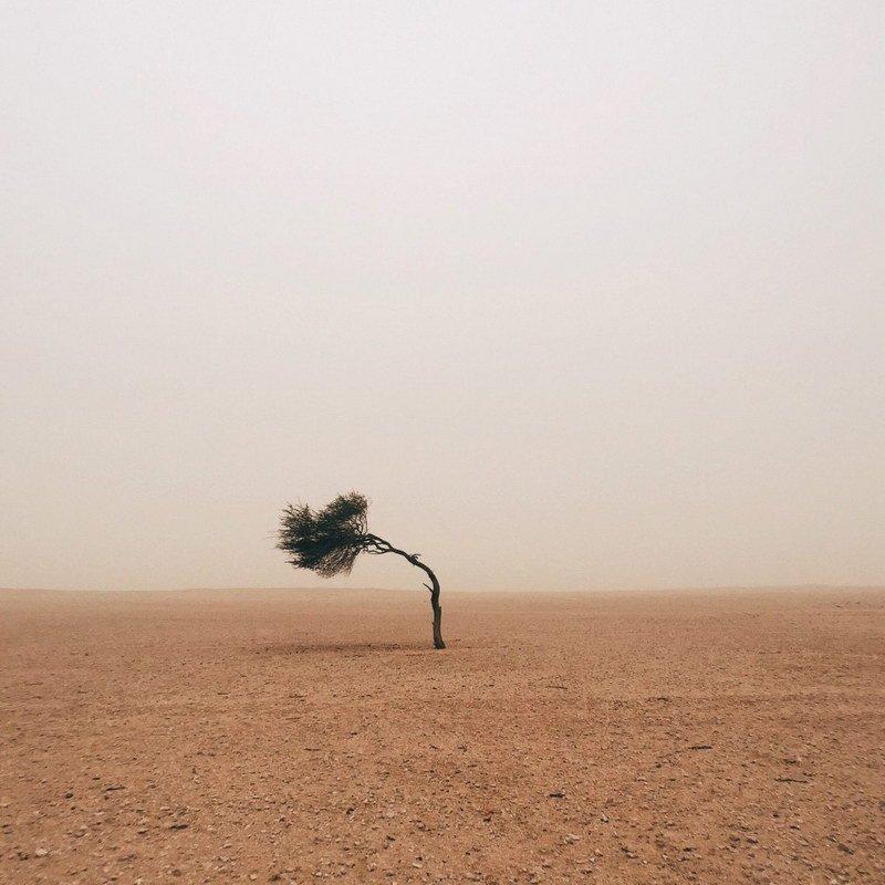 Trees 组冠军 - Ruairidh McGlynn(英国)