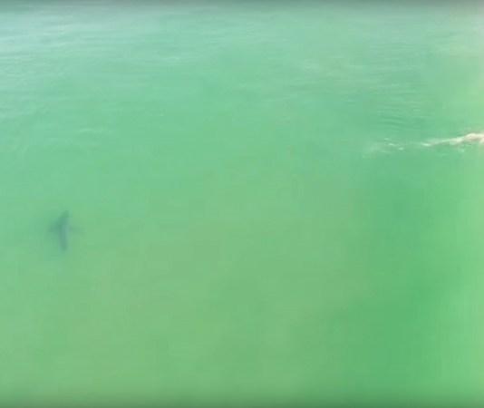 drone surfeur+requin