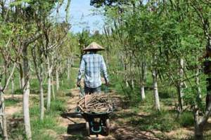 moringa-farm-baca-villa-working-in-the-fields