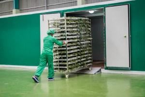Baca-Villa-High-standard-Hygienic-Food-grade-trolleys-high-capacity-drying-automatic
